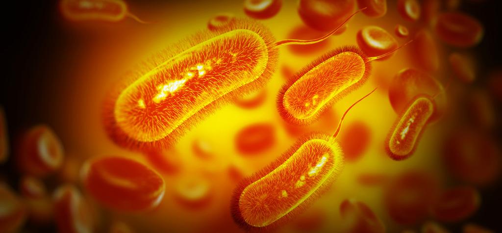 Epidémie de SHU pédiatrique à E. coli O26 en France métropolitaine en lien avec la consommation de fromages Saint Marcellin et Saint Félicien : point de situation au 28 mai 2019