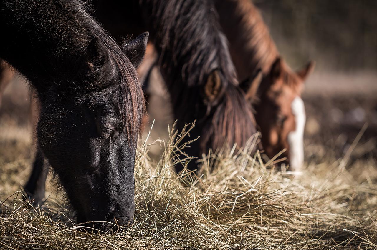 Cas de salmonelloses liés à la consommation de viande de cheval crue ou peu cuite